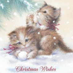 Merry Christmas Wishes : Illustration Description Kitten Christmas Card comes in a set of Personalize the inside of the card with your own personal Cat Christmas Cards, Christmas Kitten, Merry Christmas Wishes, Christmas Scenes, Christmas Animals, Vintage Christmas Cards, Christmas Pictures, Xmas Cards, Christmas Greetings