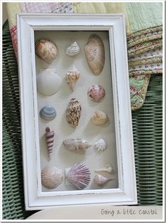 Seashell shadow box