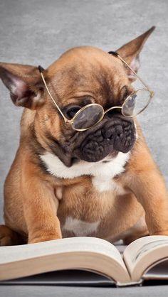 9) Animal Intelligence  -  Every animal is smart!