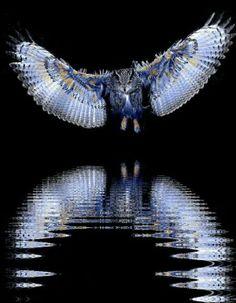Beautiful owl      }{