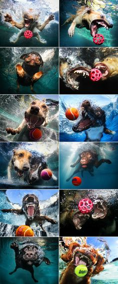 lol!!! Dogs under water: funny photo art project by Seth Casteel