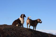 On top of Tor Doorne - Early walk