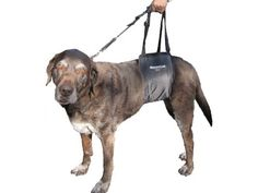 Dog Lift Harness: GingerLead Dog Rear Lift Harness - Lg Female Sling GingerLead. Free Shipping on Orders over $35. http://www.amazon.com/GingerLead-Dog-Rear-Lift-Harness/dp/B00GPYF81Q%3FSubscriptionId%3DAKIAIVRYJSO43DEAIMVA%26tag%3Ddogsicom-20%26linkCode%3Dxm2%26camp%3D2025%26creative%3D165953%26creativeASIN%3DB00GPYF81Q http://DogSiteWorld.com/ - DogSiteWorldStore...