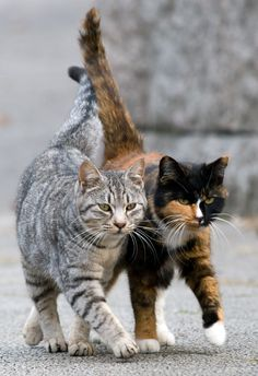 "* * "" Ya think weez should patrol de alley first?"" [GREY TABBY: "" Naw, let's just drift around and seez wut we come upon."""