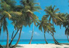 Bahama Breeze Wall Mural