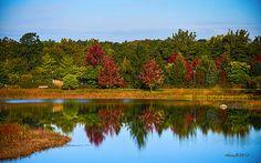 Morton Arboretum, Lisle, Illinois ©Anne Lacy
