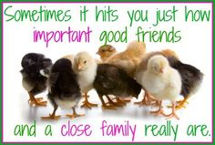 Chicken Quotes, Raising Chickens, Chickens Backyard, Be Yourself Quotes, Best Friends, Funny Quotes, Hilarious, Humor, Facebook