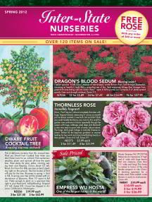 Container Plants - Fruiting - Direct Gardening Product Search