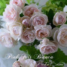 ミルラ香がたまりません しげみ先生の所で飾っていたフェアビアンカを撮らせて頂きました(*^▽^*) #ピンクフェアビアンカ #バラが好き #バラ #花の写真館 #はなのあるくらし #Roses #Rose #ミルラ香 #Nikon