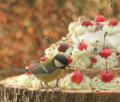 Vogels - Vogeltaart.nl Vogeltaarten Boek....hoe maak ik een natuurlijke vogeltaart