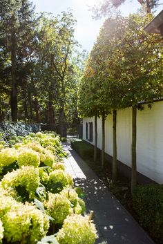 unterpflanzung begleitpflanzen f r einen rhododendron garten pinterest gartenpflanzen. Black Bedroom Furniture Sets. Home Design Ideas