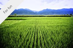 Rice paddies and beauty // Yunnan, China by J. Best Led Grow Lights, Bad Memories, Indoor Plants, Vineyard, Fun, Photography, Outdoor, Campaign, Rice
