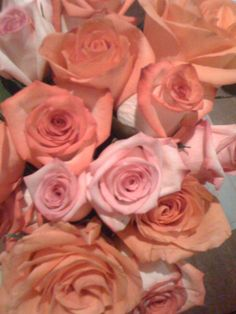 roses, #roses