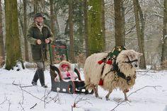 Wooly sheep pulls a Christmas sleigh