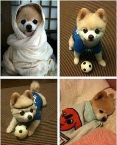 perritos