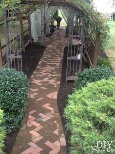 Grape arbor over recycled brick walkway attached to gazebo