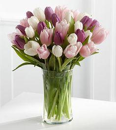 arranjo tulipas