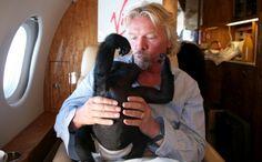 Richard Branson helping reintroduce some baby gorillas into the wild in Africa