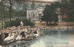 De pelikanen in de ZOO van Antwerpen, met het gebouw van de nijlpaarden (1886), op de achtergrond het centraal station, foto omstreeks 1910.