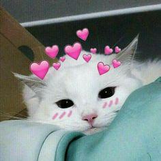 61 Ideas memes apaixonados animais for 2019 Cute Cat Memes, Cute Love Memes, Funny Cats, Cute Love Photos, Funny Cat Photos, Dog Memes, Funny Pictures, Cute Kittens, Cats And Kittens