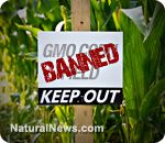 Russia bans all GM corn imports; EU may also ban Monsanto GMO in wake of shocking cancer findings - #LabelGMOs