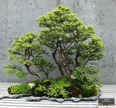 Saikei - Wikipedia, the free encyclopedia