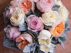 David Austin roses with dusty miller