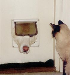 """Dog Heres Johnny!!"""" Cat Shut up!You so fat that dont fit in this joke"""""""