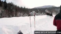 Bull Moose bookin' it through snow - Imgur