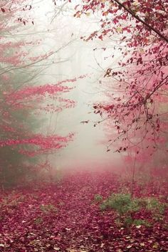...the misty spring forest.
