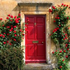 Beautiful climbing red roses - I love love love brightly colored doors in a garden
