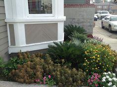 Front garden in blooming bonanza