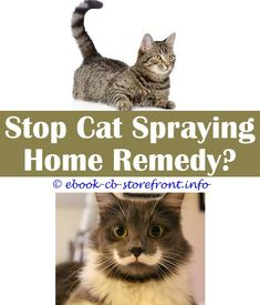 10 Diligent ideas: Cat Spray Marking Territory tag body spray sick cats.How To Stop Spayed Cat From Spraying tag body spray sick cats.Keep Cats Off Coutners With Spray.