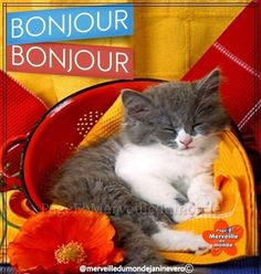 Bon Weekend, Cats, Animals, Good Morning Images, Days Of Week, Wonders Of The World, Colorful Wallpaper, Gatos, Animales