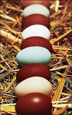 Pretty eggs. Can't wait until my black copper marans start laying and I get those pretty dark brown eggs!