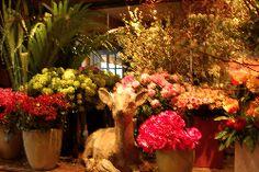 Marianne Robic - florist