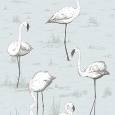 FLAMINGO WALLPAPER!  I'M IN LOVE!  Cole & Son 95/8047 Contemporary Restyled