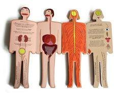 Anna & Tommy und die Anatomie