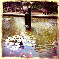 Fountains Hill Country Water Gardens Serving Austin Cedar Park