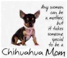 Chihuahua Mom!