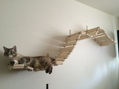 This is a wonderful Boardwalk Bridge with extra large slats that our cats love to chase each other on. This bridge isnt the best lounging piece, but will give your cat a great way to run against your wall during playtime. The Boardwalk is 6.8-feet long when stretched out and 5.8-feet wide when mounted on the wall (spanning 5 studs). The 11 wide slats will give your cat more room to play. Attached at various lengths are five posts that are meant to be installed into studs. The item will be…