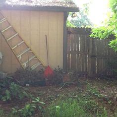 Shade backyard