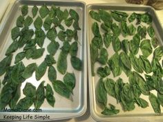 How to freeze fresh basil leaves