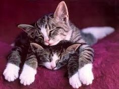 Two sleepy grey tabby kittens. I have always loved this picture, ever since I saw it on a Cat Naps calendar.