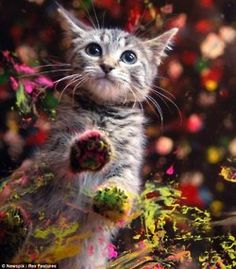 Cats who do art