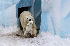Los 25 Momentos Más Emocionantes De Padres En El Reino Animal