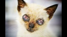 Amazing recovery of a blind kitty living on the streets hiding in the ga...