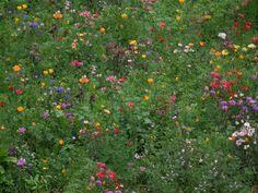 "dirtshrines: "" Goodbye summer……or maybe not… by Caroline "" Nature Aesthetic, Flower Aesthetic, Aesthetic Vintage, Des Fleurs Pour Algernon, Mother Earth, Mother Nature, Inka, Flowers Nature, Aesthetic Pictures"