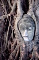 Fototapety Budda - Obrazy na płótnie – Naklejki – Plakaty – piXteria