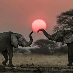 beautiful photo. .!! @iloveelephant262 -  from @africanimals -  Nature is Beautiful  Credits for @ingwe911 for capturing this stunning moment  - For info about promoting your elephant art or crafts send me a direct message @elephant.gifts or emailelephantgifts@outlook.com  . Follow @elephant.gifts for inspiring elephant images and videos every day! . .  #elephant #elephants #elephantlove